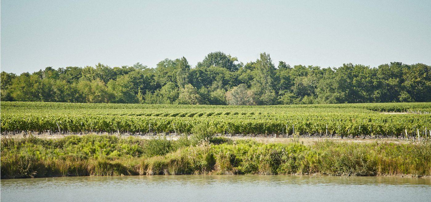 Vignoble du Château Prieuré-Lichine, terroirs appellation Margaux
